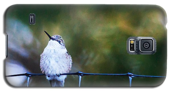 Galaxy S5 Case featuring the photograph Ruby-throated Hummingbird  Staying Warm by Edward Peterson
