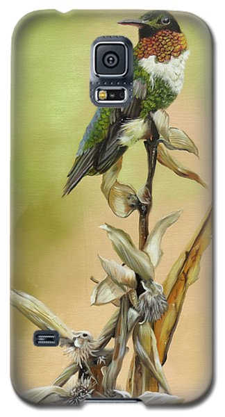 Ruby Throated Hummingbird Study Galaxy S5 Case