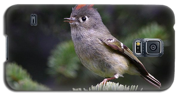 Rubycrowned Kinglet Galaxy S5 Case