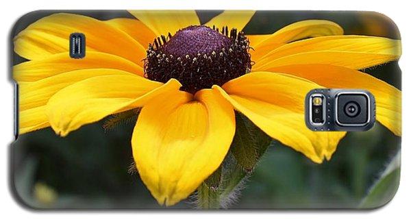 Rudbeckia Bloom Up Close Galaxy S5 Case