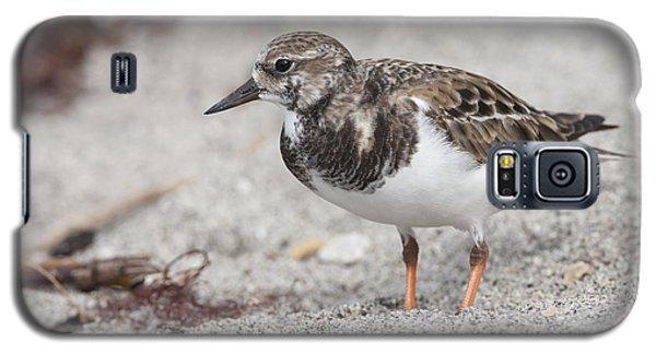 Ruddy Turnstone On The Beach Galaxy S5 Case