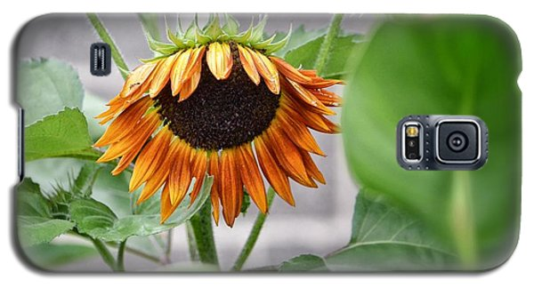 Galaxy S5 Case featuring the photograph Rueful by Penni D'Aulerio