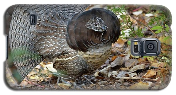 Ruffed Up- Ruffed Grouse Displaying Galaxy S5 Case