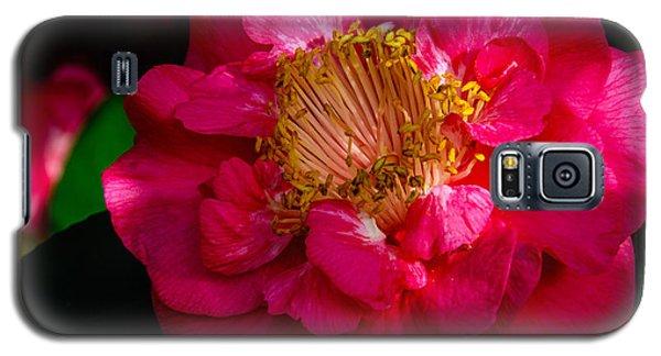 Ruffles Of Pink  Galaxy S5 Case