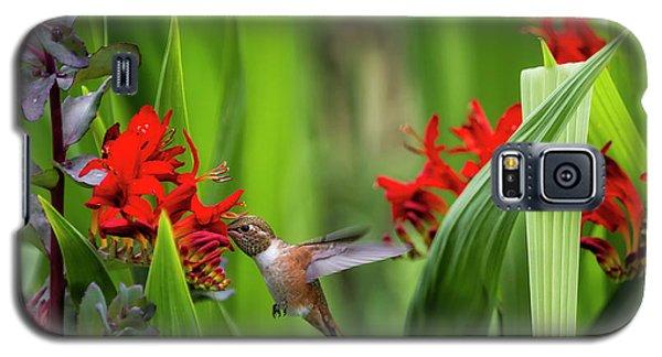 Rufous Hummingbird Feeding, No. 3 Galaxy S5 Case