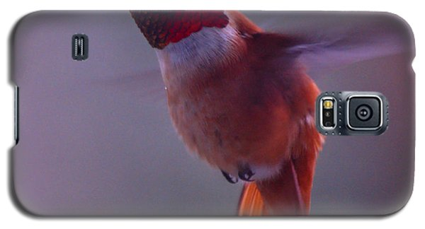 Rufus Hummingbird Galaxy S5 Case