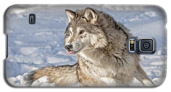 Running Wolf Galaxy S5 Case