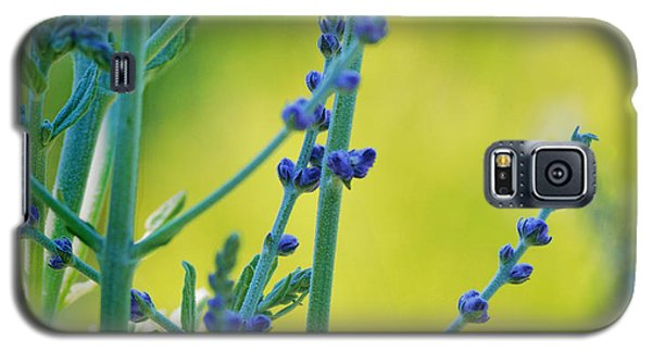 Galaxy S5 Case featuring the photograph Russian Sage by Douglas MooreZart