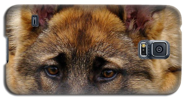 Sable German Shepherd Puppy Galaxy S5 Case