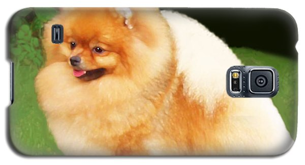 Sable Pomeranian Galaxy S5 Case