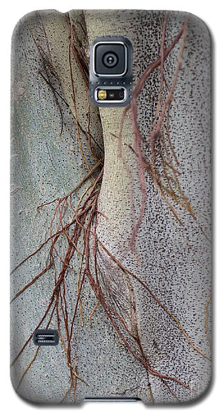Sacred Bodhi Tree Detail With Red Creeper Vines Galaxy S5 Case by Jason Rosette