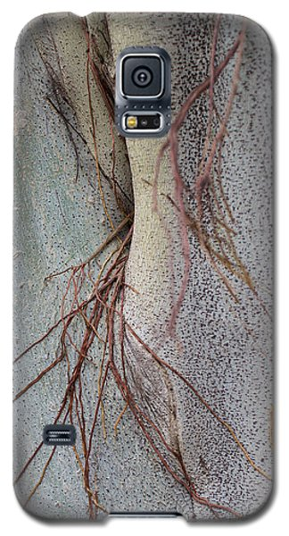 Sacred Bodhi Tree Detail With Red Creeper Vines Galaxy S5 Case