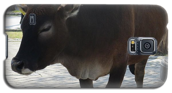 Galaxy S5 Case featuring the photograph Sacred Cow 2 by Randall Weidner