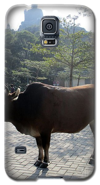 Galaxy S5 Case featuring the photograph Sacred Cow 3 by Randall Weidner
