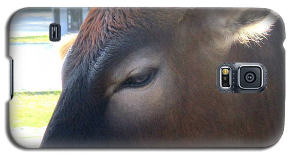 Galaxy S5 Case featuring the photograph Sacred Cow 4 by Randall Weidner