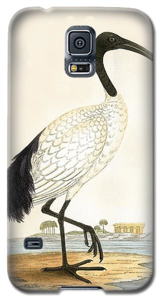 Sacred Ibis Galaxy S5 Case by English School