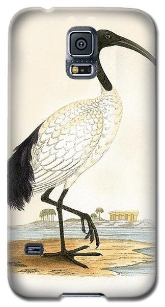 Sacred Ibis Galaxy S5 Case by English School