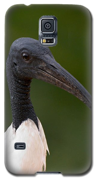 Sacred Ibis Galaxy S5 Case