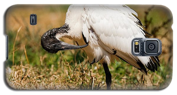 Galaxy S5 Case featuring the photograph Sacred Ibis by Nick  Biemans