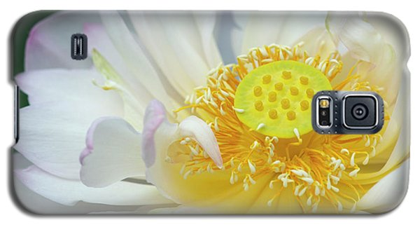 Galaxy S5 Case featuring the photograph Sacred Lotus Flower by Tim Gainey