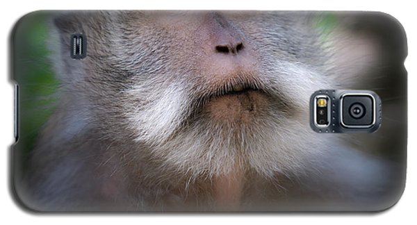 Sacred Monkey Forest Sanctuary Galaxy S5 Case by Larry Marshall