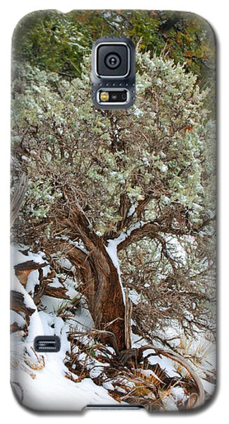 Galaxy S5 Case featuring the photograph Sage Brush Williams Arizona by Donna Greene