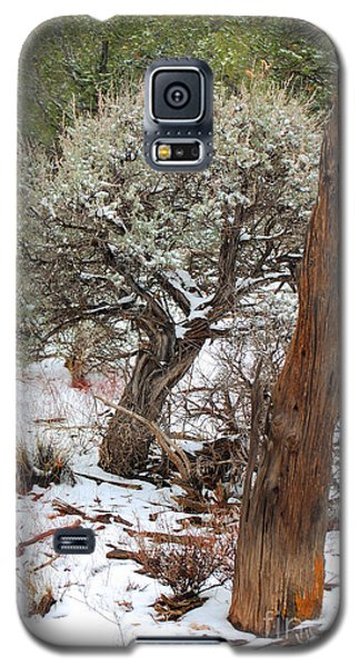 Galaxy S5 Case featuring the photograph Sage Bush Grand Canyon by Donna Greene