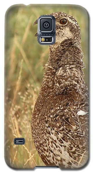 Galaxy S5 Case featuring the photograph Sage Grouse Calling by Max Allen
