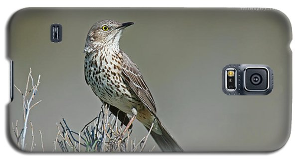 Sage Thrasher Galaxy S5 Case