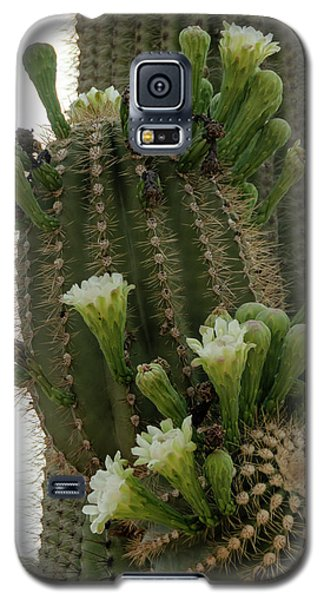Saguaro Buds And Blooms Galaxy S5 Case