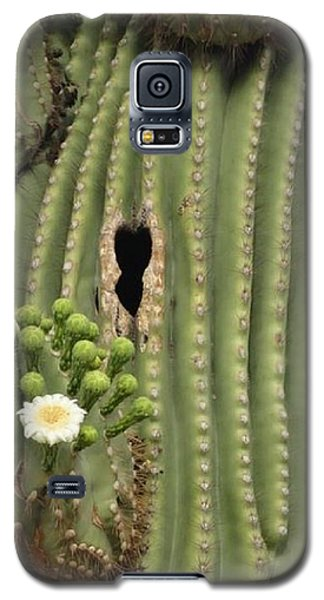 Saguaro In Bloom Galaxy S5 Case