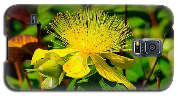 Saint John's Wort Blossom Galaxy S5 Case