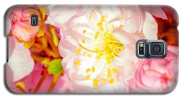 Galaxy S5 Case featuring the photograph Sakura Cherry Flower - Wedding Of Nature by Alexander Senin