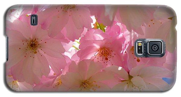 Sakura - Japanese Cherry Blossom Galaxy S5 Case