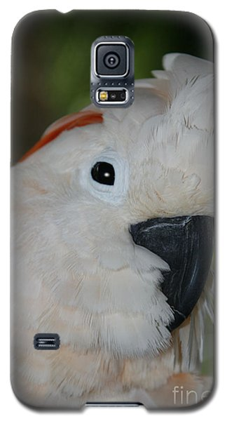Salmon Crested Cockatoo Galaxy S5 Case by Sharon Mau