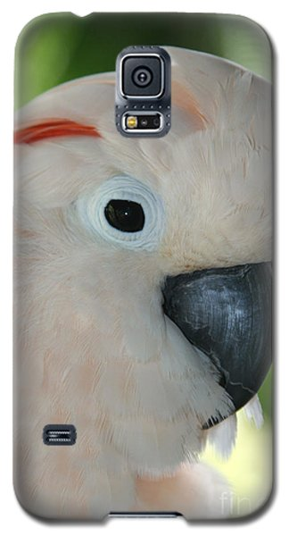 Salmon Crested Moluccan Cockatoo Galaxy S5 Case by Sharon Mau
