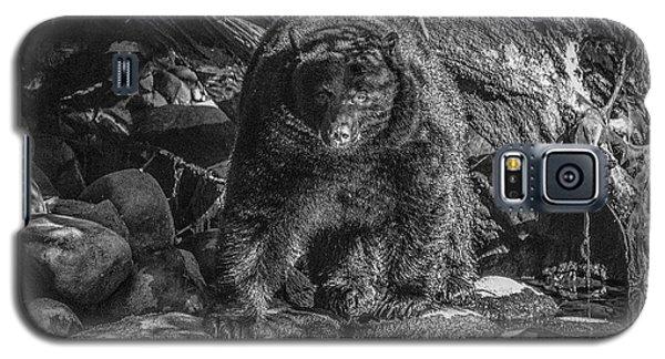 Salmon Seeker Black Bear  Galaxy S5 Case
