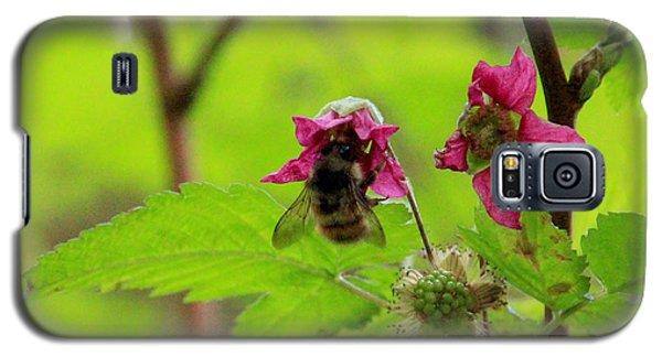 Salmonberry Honey Galaxy S5 Case