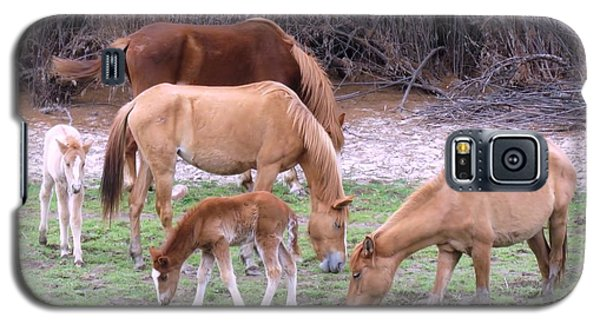 Salt River Wild Horses In Winter Galaxy S5 Case