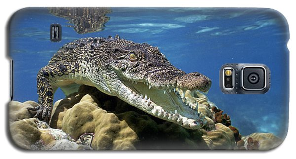Saltwater Crocodile Smile Galaxy S5 Case by Mike Parry