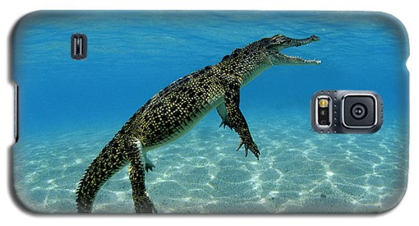 Saltwater Crocodile Galaxy S5 Case by Franco Banfi and Photo Researchers