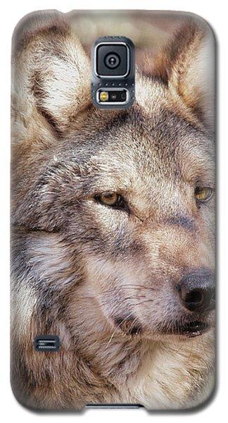 Sancho Galaxy S5 Case