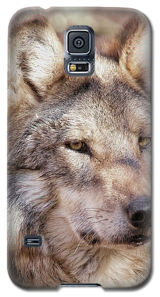 Sancho Galaxy S5 Case by Elaine Malott