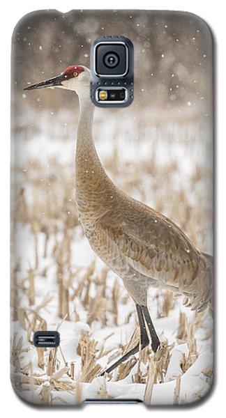 Sandhill Crane 2016-3 Galaxy S5 Case