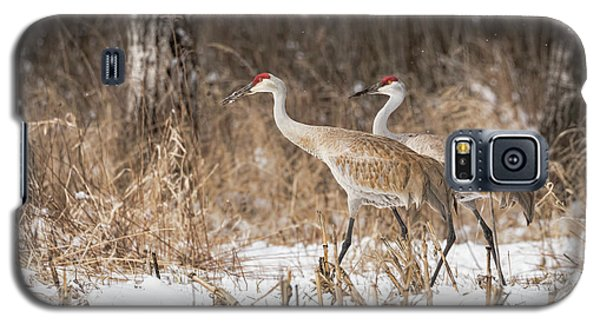 Sandhill Crane 2016-4 Galaxy S5 Case by Thomas Young