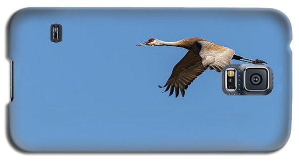 Galaxy S5 Case featuring the photograph Sandhill Crane 2017-1 by Thomas Young