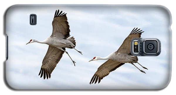 Sandhill Crane Approach Galaxy S5 Case by Mike Dawson