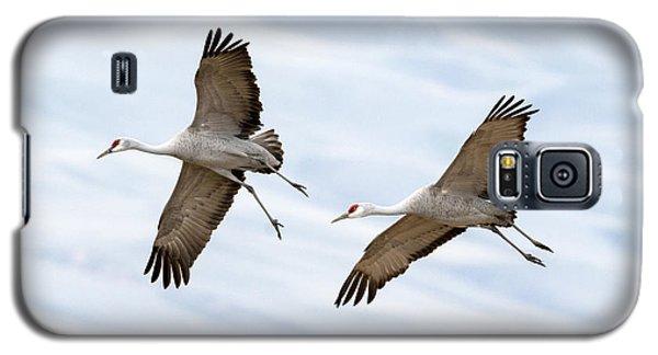 Sandhill Crane Approach Galaxy S5 Case by Mike Dawson