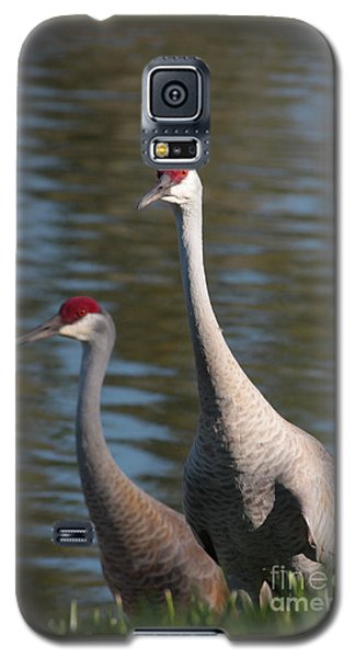 Sandhill Crane Couple By The Pond Galaxy S5 Case