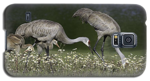 Sandhill Crane Family Galaxy S5 Case